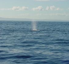 Whale Spout-2