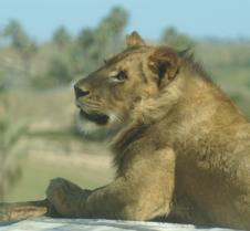 Wild Animal Park 03-09 215