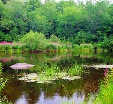 Serinity Lake 1