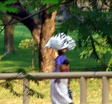 Lokuthal & Safari Lodges & Grounds0061