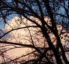 cloudsthrutrees