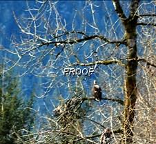 eagletree-18