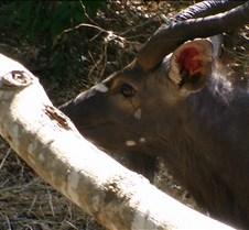 Ivory Lodge Safari Mupulanga0063