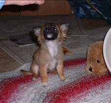 puppy picts 9-21-03 042