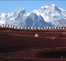 2008 Nov Lijiang 095