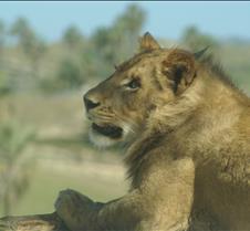Wild Animal Park 03-09 213