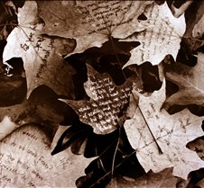 Poems on Leaves