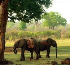 Zimbabwe Vic Falls0020