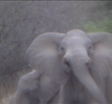 Ivory Lodge & Safari Pictures0106