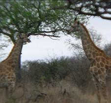 Ivory Lodge & Safari Pictures0084