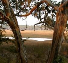Window to the Marshlands