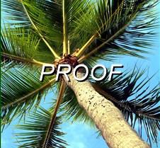 Oahu Palm 3
