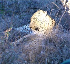 Ivory Lodge Safari Mupulanga0033