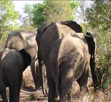 Ivory Lodge Safari Mupulanga0052