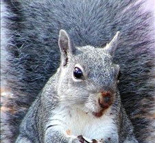 091203 Squirrel 81a