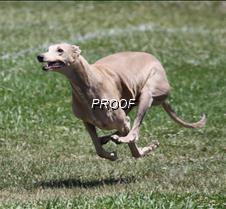 Test_dog_9578Cr