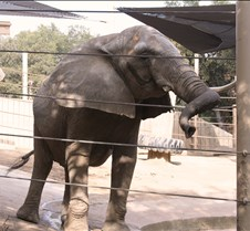 J Zoo 0611_113