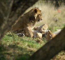 Wild Animal Park 03-09 164