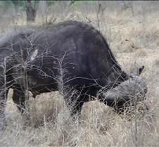 Ivory Lodge & Safari Pictures0100