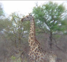 Ivory Lodge & Safari Pictures0086