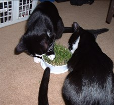 Cat Grass Fun 5