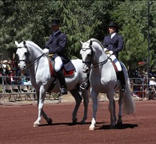 mounted shooters lipizon stallions jul 0