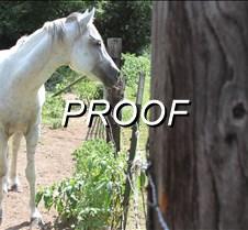 08-11-13_Horse01