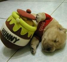 PoohDog