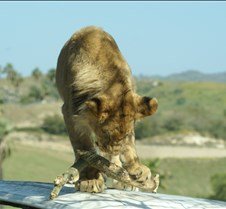 Wild Animal Park 03-09 204
