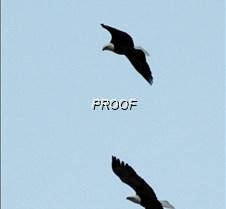 eaglesflight-3