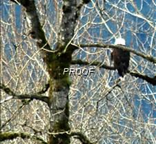 eagletree-9