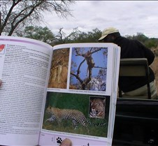 Ivory Lodge & Safari Pictures0139