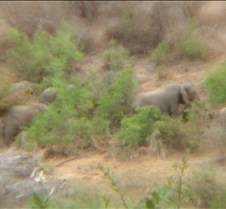 Ivory Lodge & Safari Pictures0155