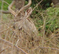 Ivory Lodge & Safari Pictures0146