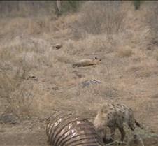Ivory Lodge & Safari Pictures0024