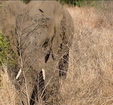 Ivory Lodge Safari Mupulanga0047