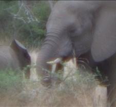 Ivory Lodge & Safari Pictures0105