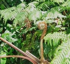 Hawaii 2010 121