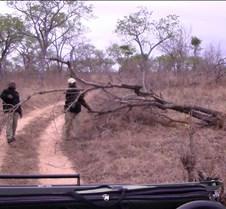 Ivory Lodge & Safari Pictures0042