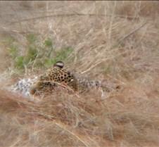 Ivory Lodge & Safari Pictures0037