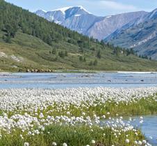 Landscape_WildHorses