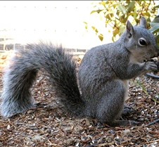 071702Squirrel109