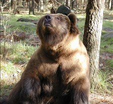 013004 Kodiak Female 126