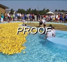 082513_ducks_04