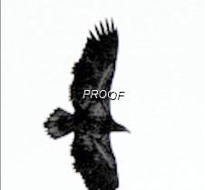 eagleflight-23