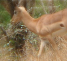 Ivory Lodge & Safari Pictures0159