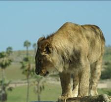 Wild Animal Park 03-09 208
