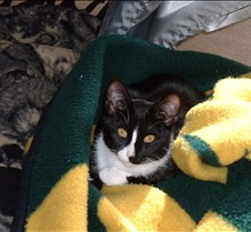 Crazy in the Packer Blanket 2