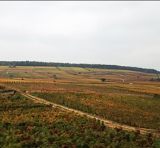 Vineyards in Boudreaux, France