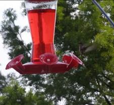 hummingbird2sign